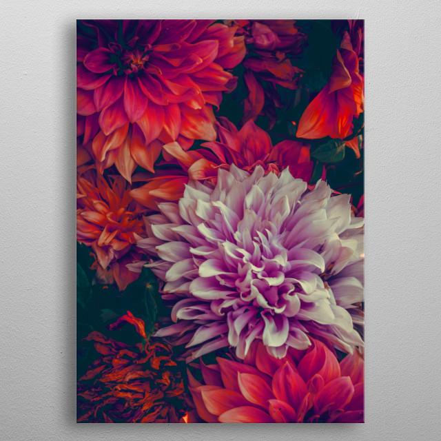 flowers dhalia bouquet metal poster