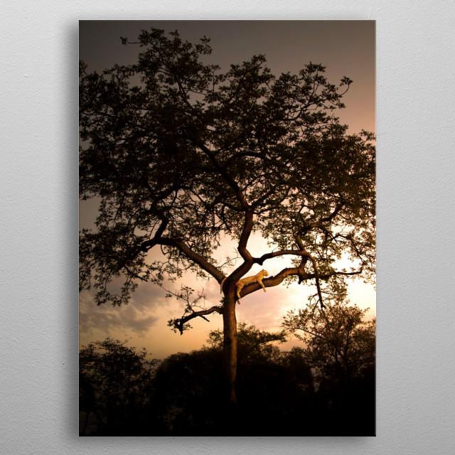 beautiful tree metal poster