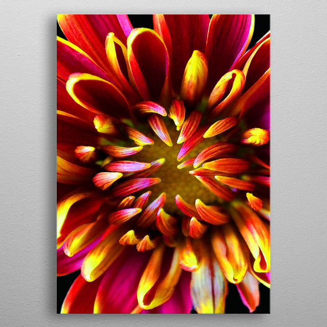 High-quality metal print from amazing Flowers collection will bring unique style to your space and will show off your personality. metal poster