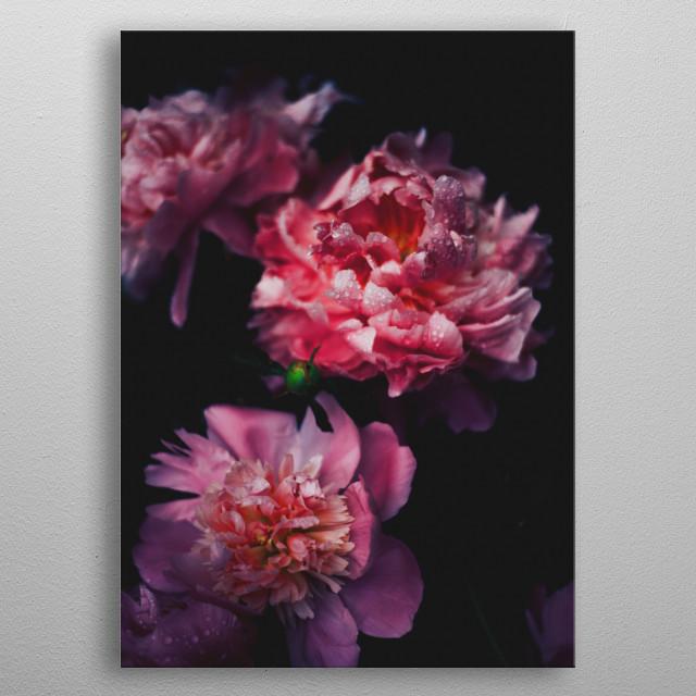 pink beautiful flowers metal poster