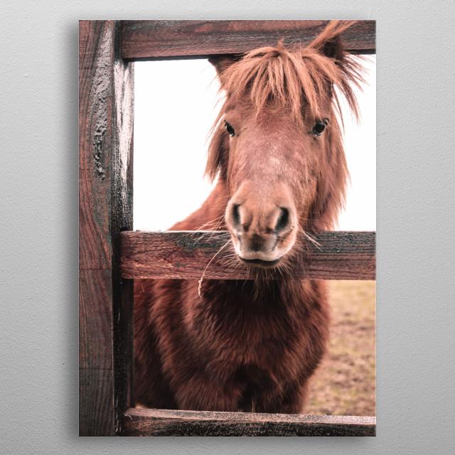 horse in scotland  metal poster