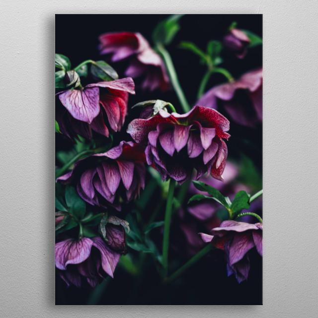 purple flowers metal poster