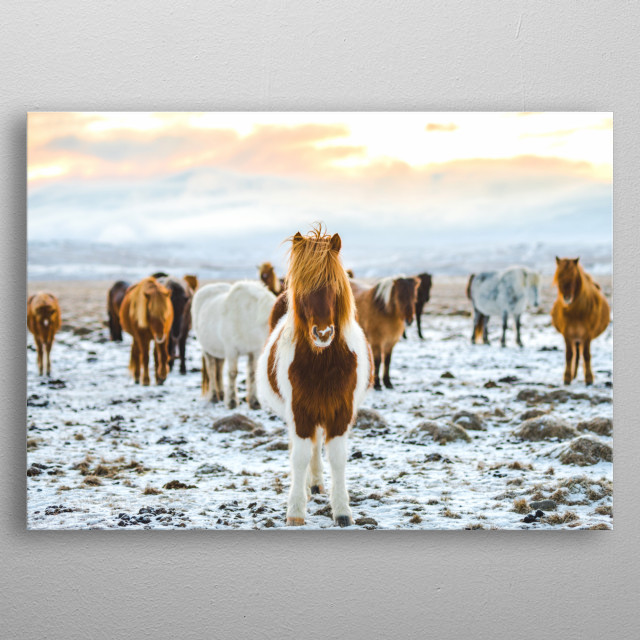horses in snowing scotland metal poster