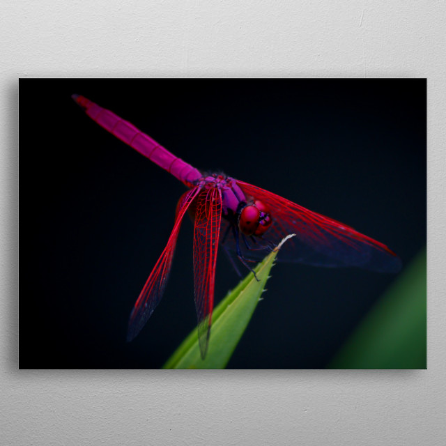 red dragonfly in flowers metal poster