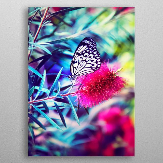 butterfly beauty  metal poster