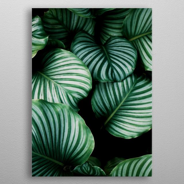 plant big leaves  metal poster