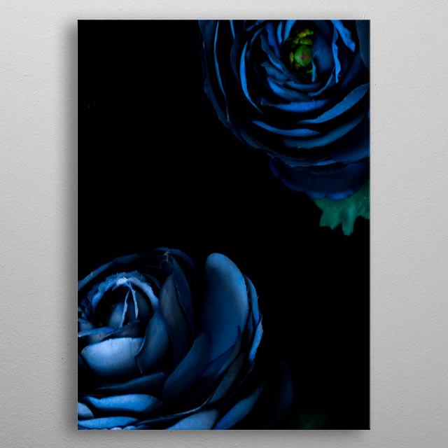 blue flowers in dark background  metal poster