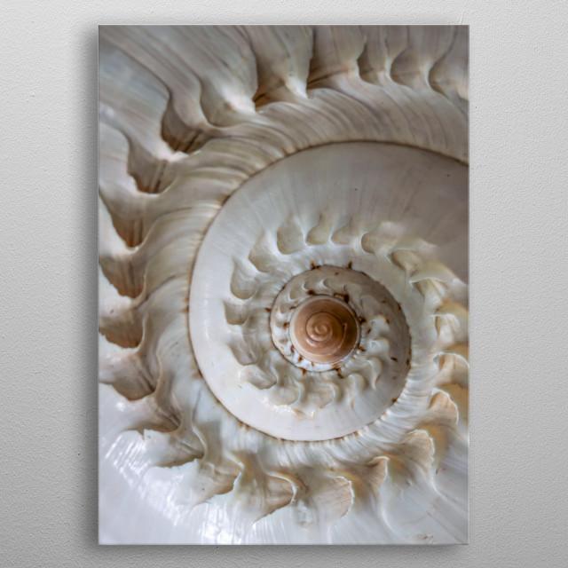 Closeup of a pretty white shell metal poster