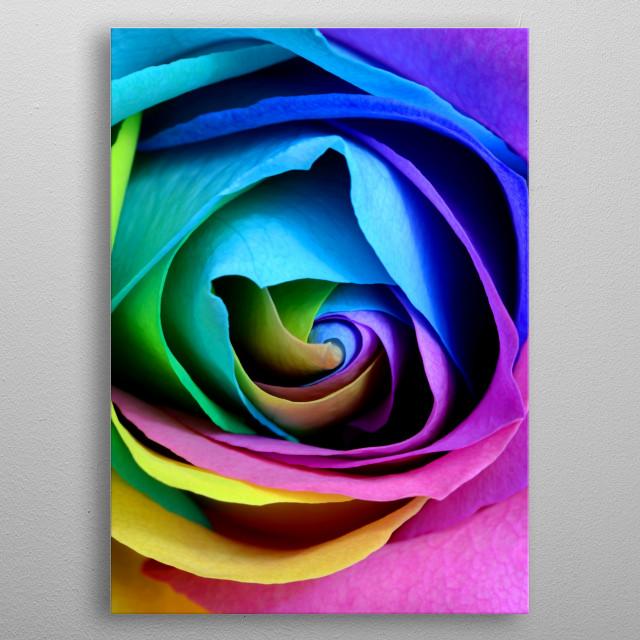 colorful rose close up metal poster