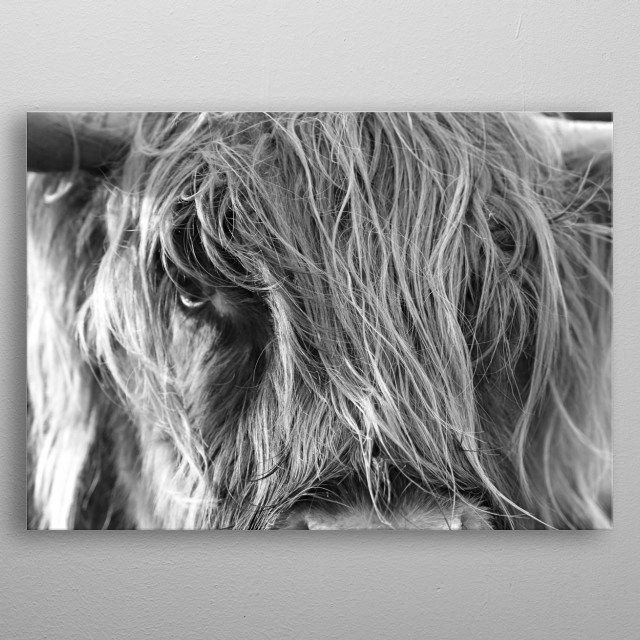 black white close up cow metal poster