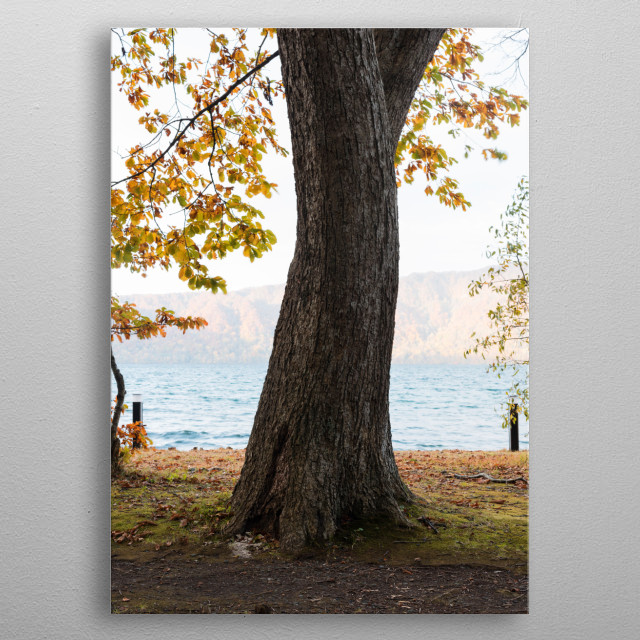 A good young man is asking for love from him. Autumn, lakeside, beautiful trunk, light makeup, a young girl wearing a thin skirt, showing th metal poster