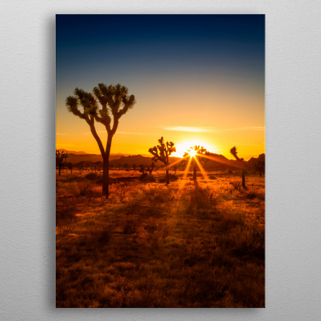 Typical impression from Joshua Tree National Park during sunset. The park is named after the Joshua palm lilies, also known as Joshua Trees. metal poster
