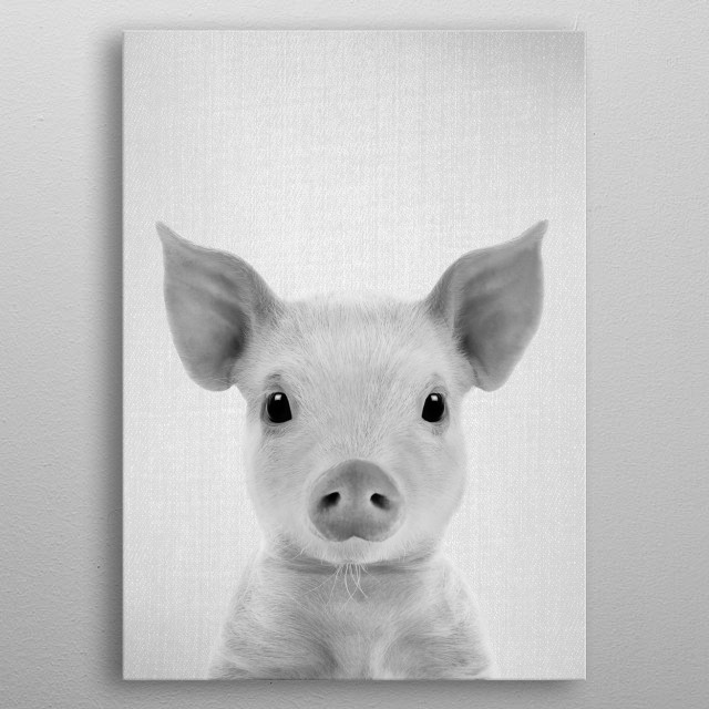 "Piglet - Black & White.  For more black & white animals check out the collection in the main page of my shop ""Gal Design"". metal poster"
