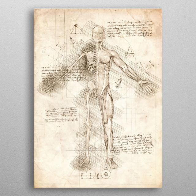 Sketch of a Human Male, half skeleton and the other half muscles metal poster