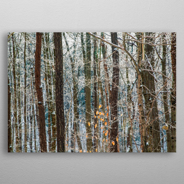 Dark brown trunks of mature trees contrast with peach and apricot leaves. Bright white snow coats and ground. Evergreens add deep teal blue. metal poster