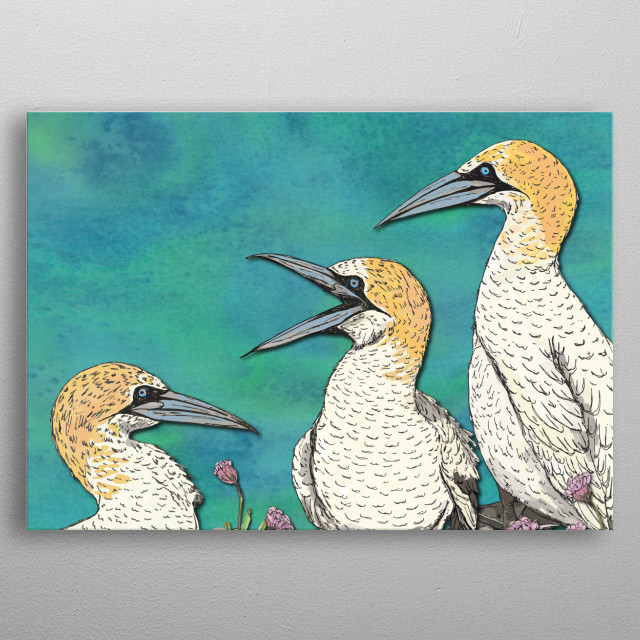 Stunning gannets - sea birds having a natter.  Created digitally from pen/marker drawings and ink-painted fabrics. metal poster