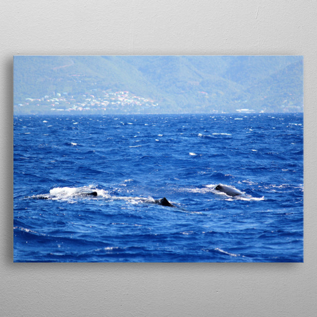 Whale Watching near Dominica in the Caribbean Sea. metal poster