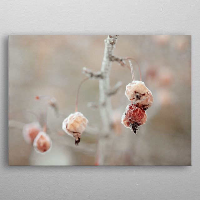 These peach and burnt orange crab apples are in our front yard, coated with frost. Finished in muted tones and layers of vintage texture. metal poster