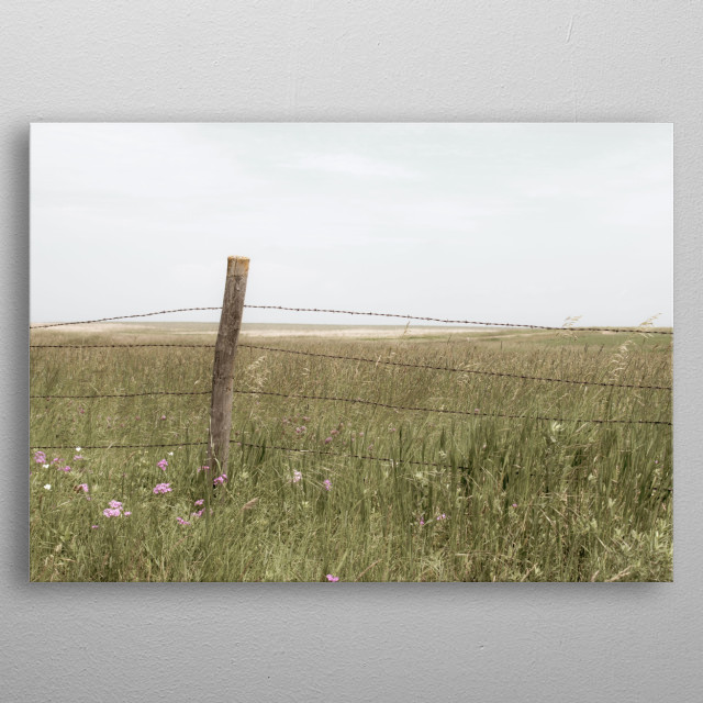 Barbwire fence with the feeling of spring, and flowers of hope.   Enjoy! metal poster