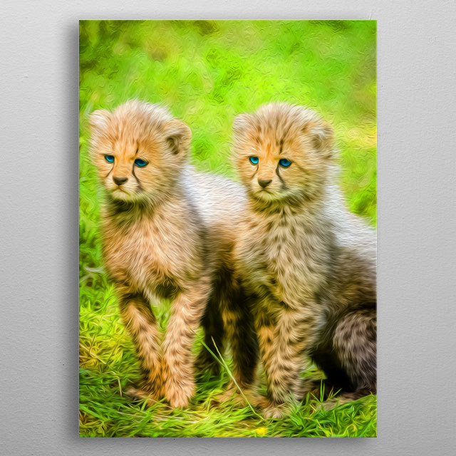 Cheetahs are the fastest land animals on Earth who are also great rpedators, and it is very easy to forget that while looking at them. metal poster