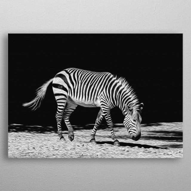 A gorgeus zebra wandering a black and white world aimlessly - what's more beautiful than that? metal poster