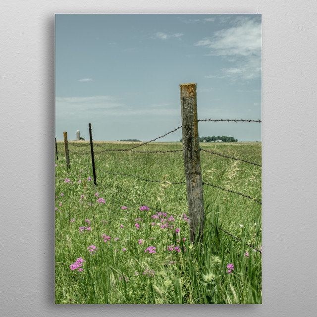 Barbwire Fence standing tall with grasses and  was a great stop along the road on the way home to get something forgoten.... metal poster