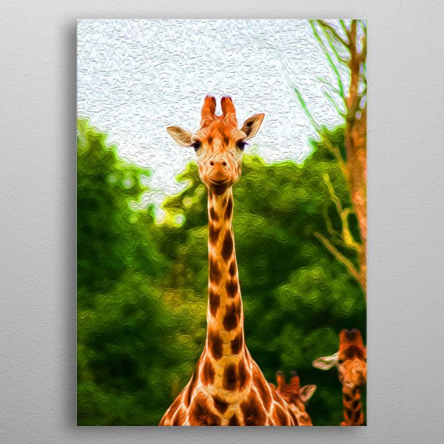 Giraffes are known for having long necks. Just look at them! metal poster