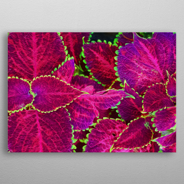 Purple leaves for all to see! metal poster
