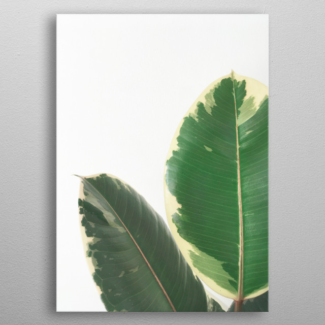 A photographic study of a house plant. metal poster