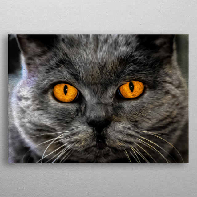 Dare to make eye contact with this cat? metal poster
