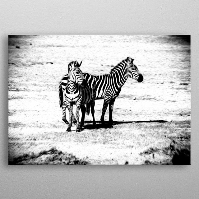 Black and white art for a couple of zebras. metal poster