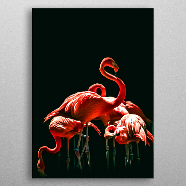 Flamingos are some of the most beautiful and distinct birds in the world. metal poster