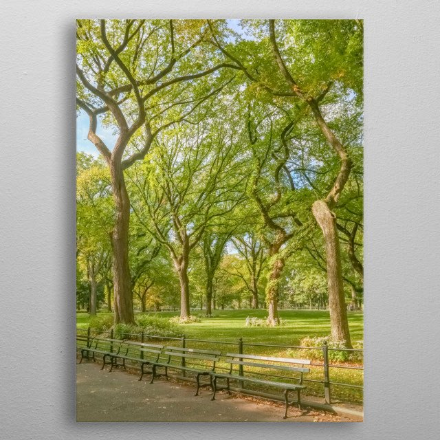Blue sky peeks through a canopy of American Elm trees in Central Park, New York City. The image has a gauzy glow. metal poster
