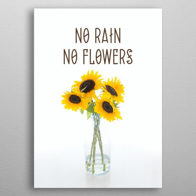 no rain no flowers typography text art quote by wordfandom sunflower minimal metal poster