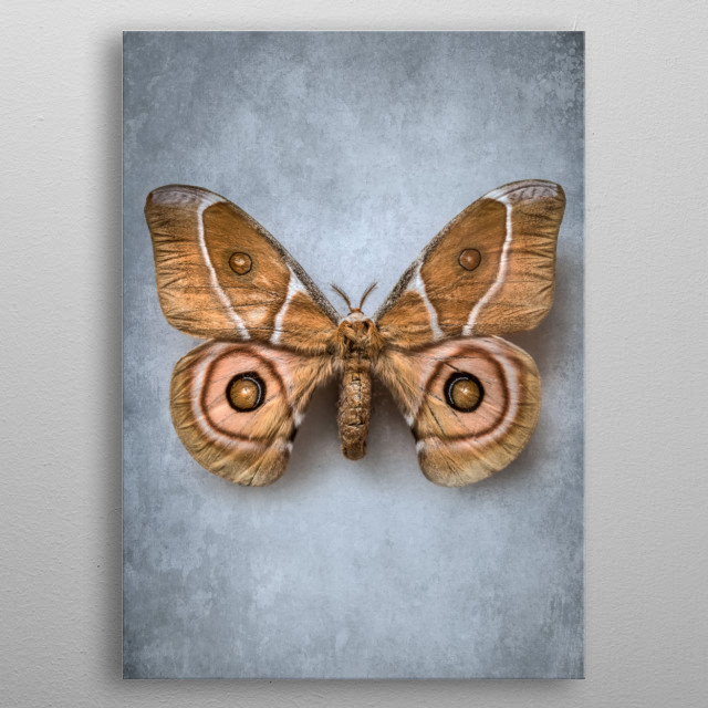 Closeup of a pretty exotic brown butterfly metal poster