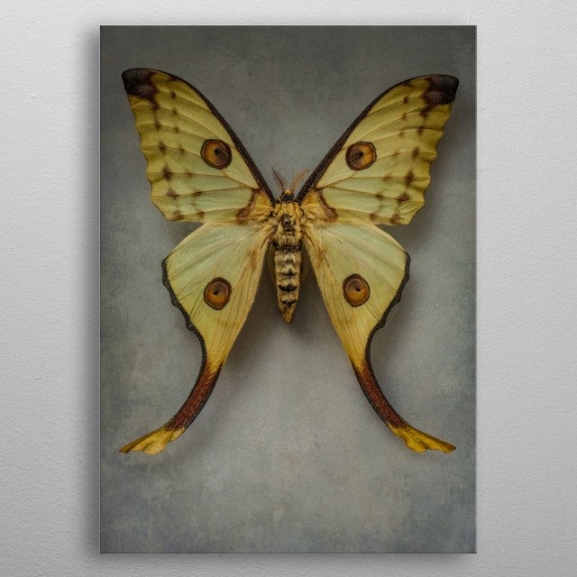 closeup of a pretty yellow exotic butterfly metal poster