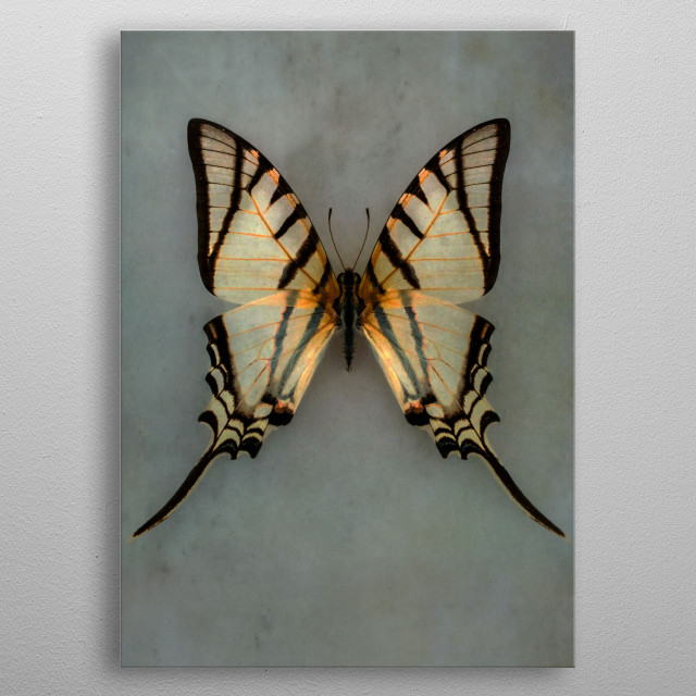 Closeup of a pretty yellow and black butterfly metal poster
