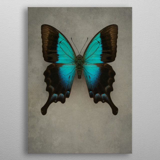 Closeup of a pretty Exotic blue butterfly metal poster