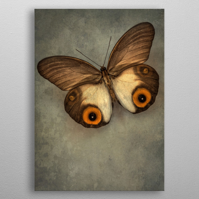 Closeup of a pretty exotic brown and yellow butterfly metal poster