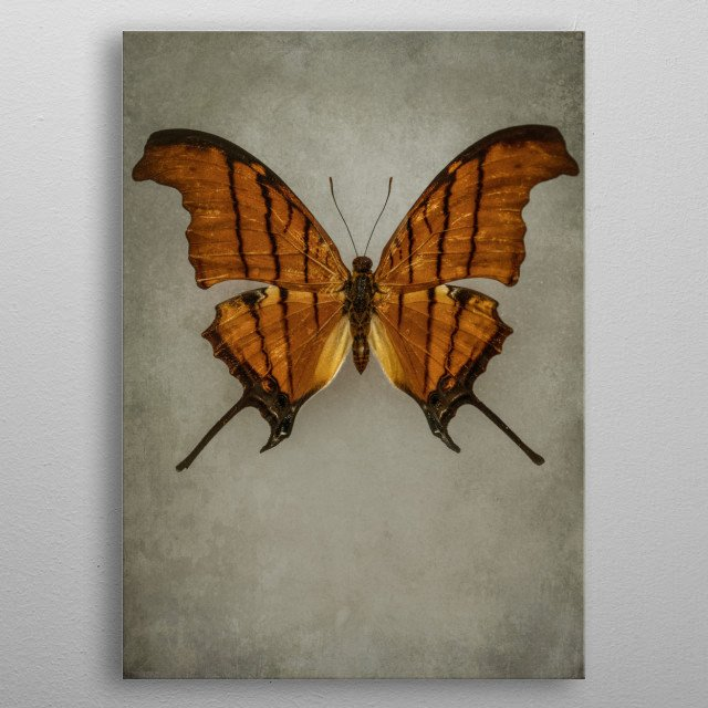 Closeup of a pretty butterfly in orange and brown colors metal poster