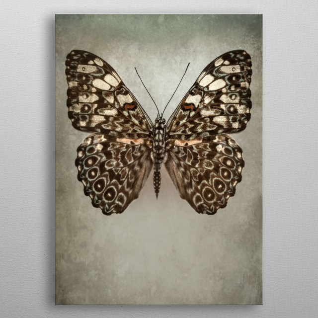 Closeup of a pretty exotic butterfly in beige and brown colors metal poster