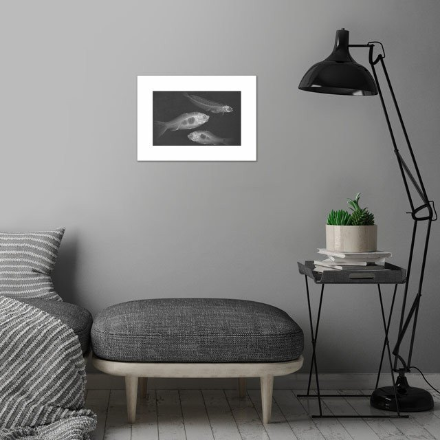 Animal X-ray wall art is showcased in interior