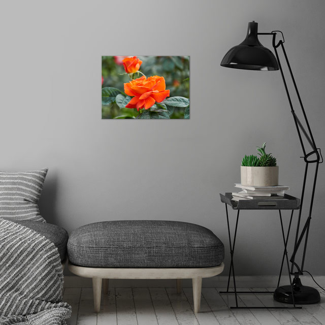 roses in bloom in the garden wall art is showcased in interior