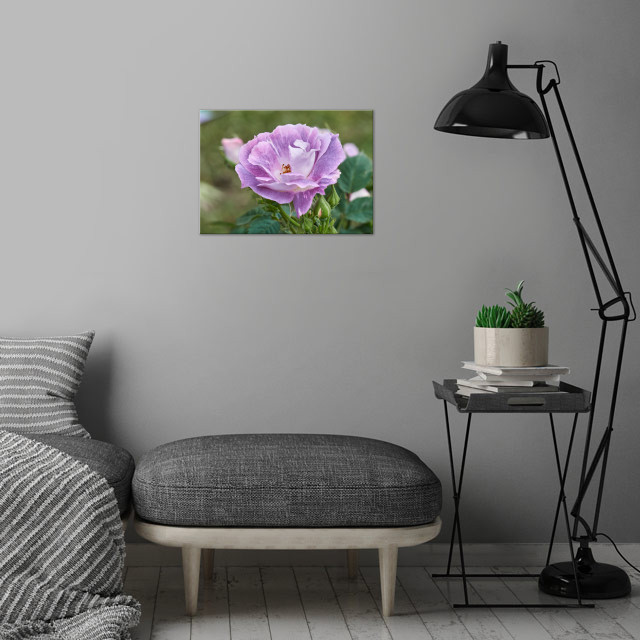 roses in bloom in the gard wall art is showcased in interior