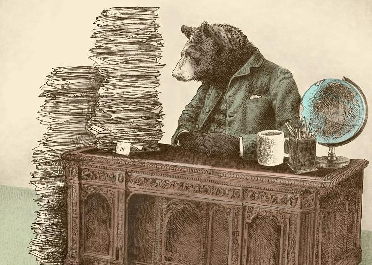 bear office