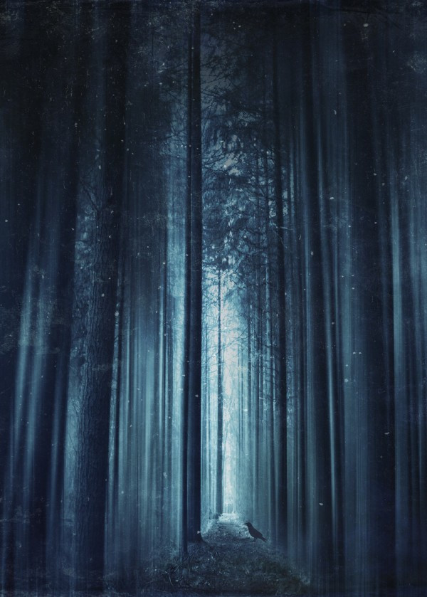 mystical-world-of-nature-and-solitude-in-dirk-wüstenhagens-images
