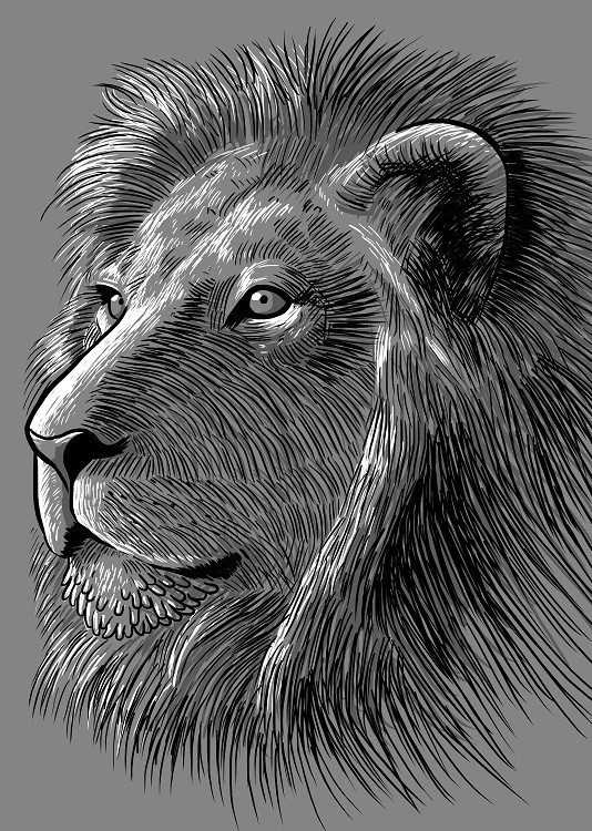 bw lion poster