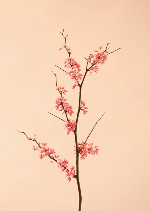 spring-design-floral-art