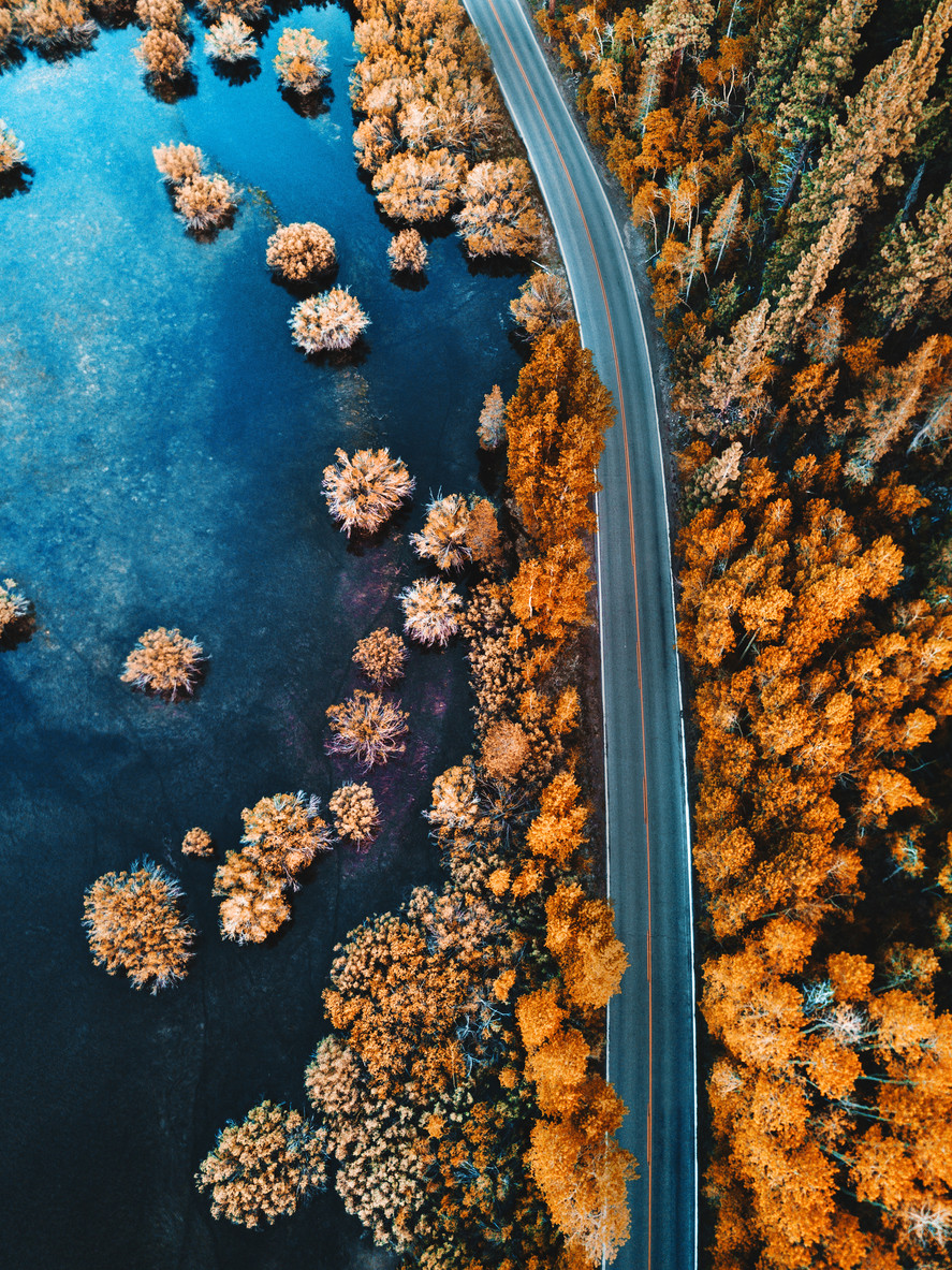 helicopter-view-of-the-pine-forest-along-a-lake-autumn-photo