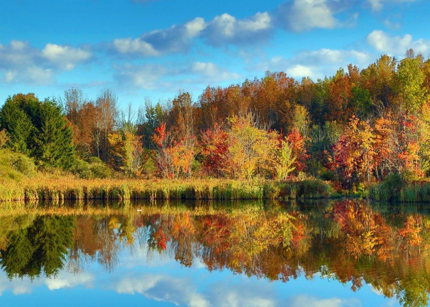 landscape-fall-autumn-trees-leaves-foliage-blue-yellow-red-orange-new-york-reflection-pond-nature-landscape